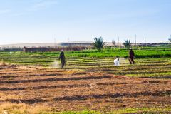 Rolnicy pracuje na polach Zdjęcia Stock