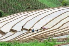 Rolnicy w ricterrace zdjęcia royalty free