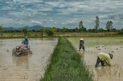 Rolnicy w ryżu polu Zdjęcia Stock