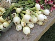 rolnicy wprowadzać na rynek cebule Zdjęcie Stock