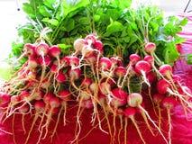 Rolnicy Wprowadzać na rynek Vegies Obraz Stock
