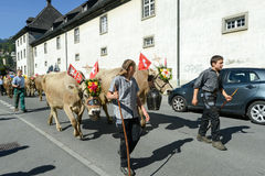 Rolnicy z stadem krowy na rocznym transhumance przy Engelb Zdjęcia Royalty Free