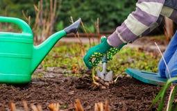 Rolnicy zasadzający zieleń krótkopędy Obrazy Royalty Free