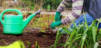 Rolnicy zasadzający zieleń krótkopędy Obrazy Stock