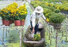 Rolnicy zbierają stokrotki i nagietka kwiatu garnki na łodziach Obrazy Royalty Free