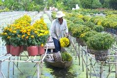 Rolnicy zbierają stokrotki i nagietka kwiatu garnki na łodziach Obraz Stock