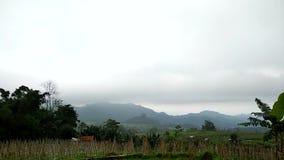 Rolnicza atmosfera Uprawia? ogr?dek z naturalnymi metodami zdjęcie wideo