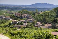 Rolnicza natura dla Prosecco wytwórnii win Obrazy Stock