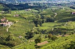 Rolnicza natura dla Prosecco wytwórnii win, Włochy Obrazy Stock