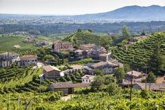 Rolnicza natura dla Prosecco wytwórnii win, Włochy Fotografia Stock
