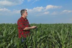 Rolnicza scena, rolnik w zielonym kukurydzanym polu Fotografia Royalty Free