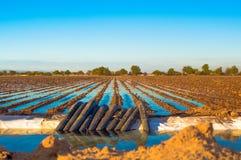 Rolnicza uprawia ziemię pompuje woda na polu obraz stock