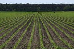 rolnicze uprawy Fotografia Royalty Free