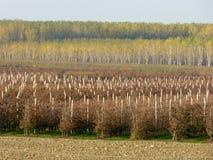 Rolnicze uprawy wzdłuż banków Po rzeka Ja - Mantua - Obraz Stock
