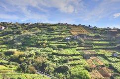 Rolniczy krajobraz Portugalska wyspa zdjęcie royalty free