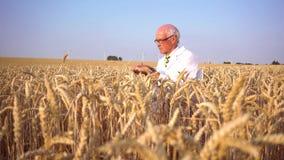 Rolniczy naukowiec patrzeje dla ilo?ci nowi ziarna zdjęcie wideo