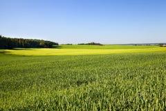 rolniczy pole Obrazy Royalty Free