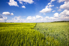 rolniczy pole Fotografia Stock
