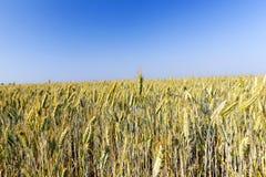 Rolniczy pole i niebieskie niebo Zdjęcie Royalty Free