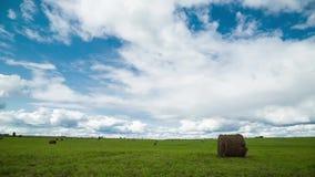 rolniczy pole zbiera? Czasów podołków krajobraz zbiory