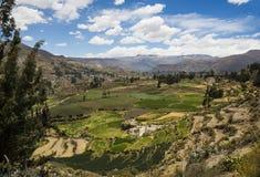 Rolniczy tarasy Colca dolina, Arequipa, Peru Zdjęcie Stock
