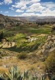 Rolniczy tarasy Colca dolina, Arequipa, Peru Fotografia Stock