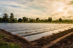 Rolniczy teren fotografia royalty free