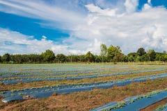 Rolniczy teren fotografia stock