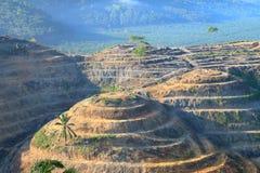 Rolniczy tereny dla zasadzać nafcianej palmy obraz stock