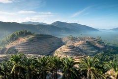 Rolniczy tereny dla zasadzać nafcianej palmy fotografia stock