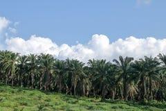 Rolniczy tereny dla zasadzać nafcianej palmy obrazy royalty free