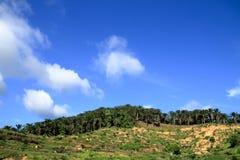 Rolniczy tereny dla zasadzać nafcianej palmy Zdjęcia Stock