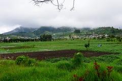 Rolniczy uprawiać ziemię w Jawa Zdjęcie Stock
