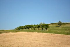 Rolniczy włoszczyzna krajobraz Zdjęcia Royalty Free