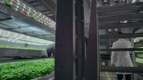 Rolniczy in?yniery Pracuje w plantaci Pełny długość portret cztery nowożytnego naukowa studiuje wybór zbiory wideo