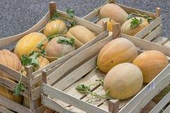 Rolników melony w i rynek drewniane skrzynki Obrazy Stock