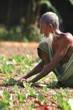 rolnik zdjęcie royalty free