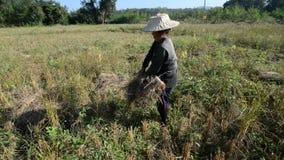 rolnik zdjęcie wideo