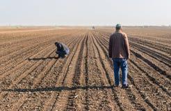 Rolnik analizuje soya ziarna po wysiewnych upraw przy rolniczym polem Zdjęcia Royalty Free