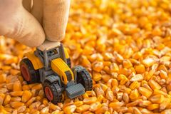 Rolnik bawić się z ciągnik zabawką nad zbierającym kukurudzy ziarnem zdjęcia royalty free