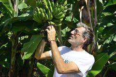 Rolnik egzamininuje bananową plantację obraz royalty free