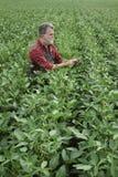 Rolnik egzamininuje soj bobowych rośliien pole Obraz Royalty Free