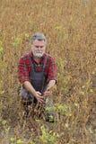 Rolnik egzamininuje soj bobowych rośliien pole Obraz Stock