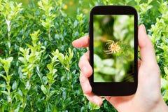 Rolnik fotografuje pająka na sieci na boxtree Obraz Stock