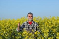 Rolnik gestykuluje w kwitnąć rapeseed pole fotografia royalty free