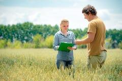 Rolnik i agronom dyskutuje o przyszłościowej uprawie banatka, przy Zdjęcia Stock