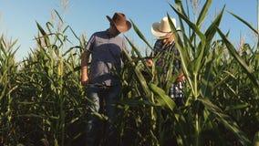 Rolnik i agronom pracuje w polu sprawdzamy dojrzewa? kukurydzanych cobs dwa biznesmen z pastylk? sprawdza dojrzenie zbiory