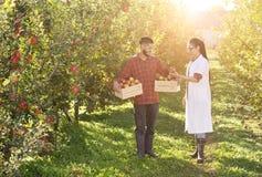 Rolnik i agronom w jabłczanym sadzie Obraz Stock
