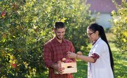Rolnik i agronom w jabłczanym sadzie Obraz Royalty Free