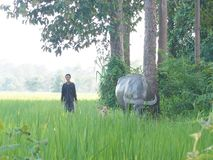 Rolnik i bizon zdjęcie stock